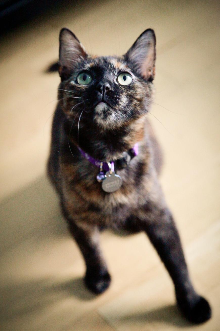 Sarah Hoppes Photography Pet Portraits